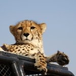 N/a'an ku se Lodge and Wildlife Sanctuary Foto