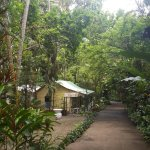 Diamond Botanical Gardens Foto