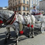 Horse and carriage rides in old square