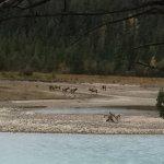 Pyramid and Patricia Lakes Foto