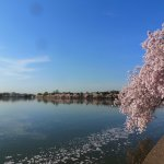 Photo de Tidal Basin