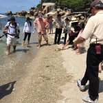 Turtle release day at the beach