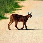 Foto de Amakhala Safari Lodge