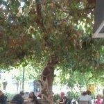 Εξωτερικό tree