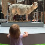 My Daughter checking out Dolly the Sheep