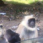 Foto de Trinetra Tours