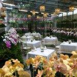 Orchid tea room