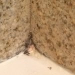 Mold in the shower/tub corner