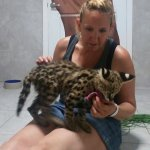 $60 (well worth it) baby serval interaction. Was raining outside, staff member took pics w/my ph