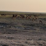 Photo de Steenbok Safari