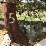 Cork tree harvested in 2015 (5)
