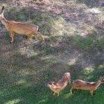 Foto di Running Y Ranch Resort