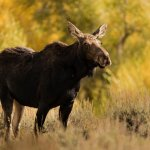 Photo de BrushBuck Wildlife Tours - Day Tours