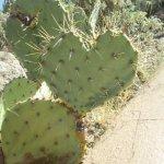 Foto de Museo del Desierto Arizona-Sonora