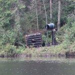 balade en canoe pour aller voir les ours ds leur milieu naturel