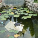 The pond, with its new terrapin