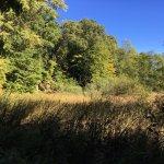 Corbett's Glen Nature Park - meadows