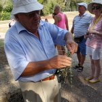 Our Greek Tourist Guide using an Olive branch to make the winner's crown