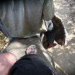 кожа на голове у слона похожа на шину камаза