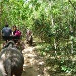 дорога назад через джунгли