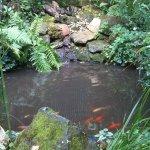bassin , reposant ,zen