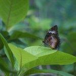 Photo de Siquijor Butterfly Sanctuary