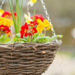 Beautiful hanging baskets from the Market Garden