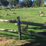 Beware of the geese on the property!