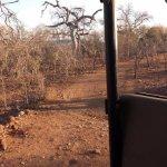 Photo de Muweti Bush Lodge