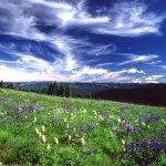 Sub-alpine meadows