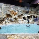 The penguin habitat