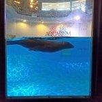 The Seal exhibit