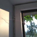 peinture abîmé et toile d'araignée en nombre