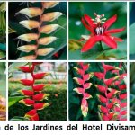 New natural collections  of  Local  Flowres on the Hotel Divisamar