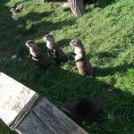 Photo de Tamar Otter and Wildlife Centre