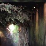 Dentro do aquário.