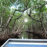 Photo de Everglades City Airboat Tours