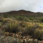 Mauna Kea from Ka'ali'ali trail