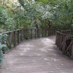 Native forest board walk, Fort Worth Botanic Gardnes