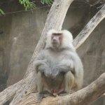 Foto de Phoenix Zoo