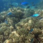 Bali Hai Reef. PBP Photos By Passy  www.photosypassy.com photosbypassy@hotmail.com