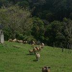 Sendero agroecoturístico a la Cascada El Tatica