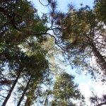 Foto di Evergreen Lodge at Yosemite