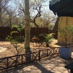 Photo de Pezulu Tree House Game Lodge