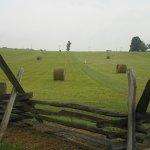 Bushomg Farm