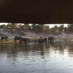 Foto de Chobe Game Lodge