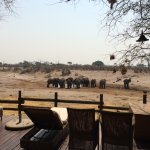 View from the pool deck - elephants at the water hole