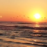 Pelican Flight at sunrise on Stewart Beach while staying at the Sandpiper RV Park