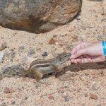 Hörnchen in den Felsen - sehr zutraulich