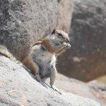 Hörnchen in den Felsen